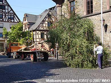 Das Maibaumaufstellen begannen drei städtischen Arbeiter um 15 Uhr mit dem Schmücken des Maibaums in der Rathausstraße vor dem Rathaus der Verbandsgemeinde St. Goar-Oberwesel.