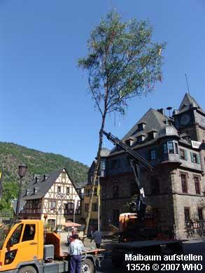 Maibaumaufstellen  auf dem Marktplatz in Oberwesel.
